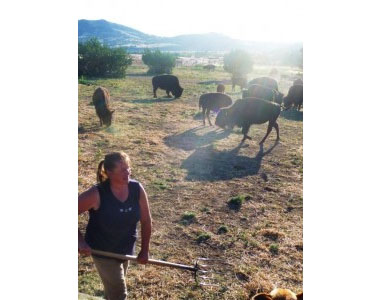 Inge Bobek feeds the bison every day